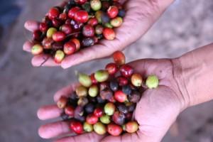 Comercio Justo / Consumo Responsable Copade